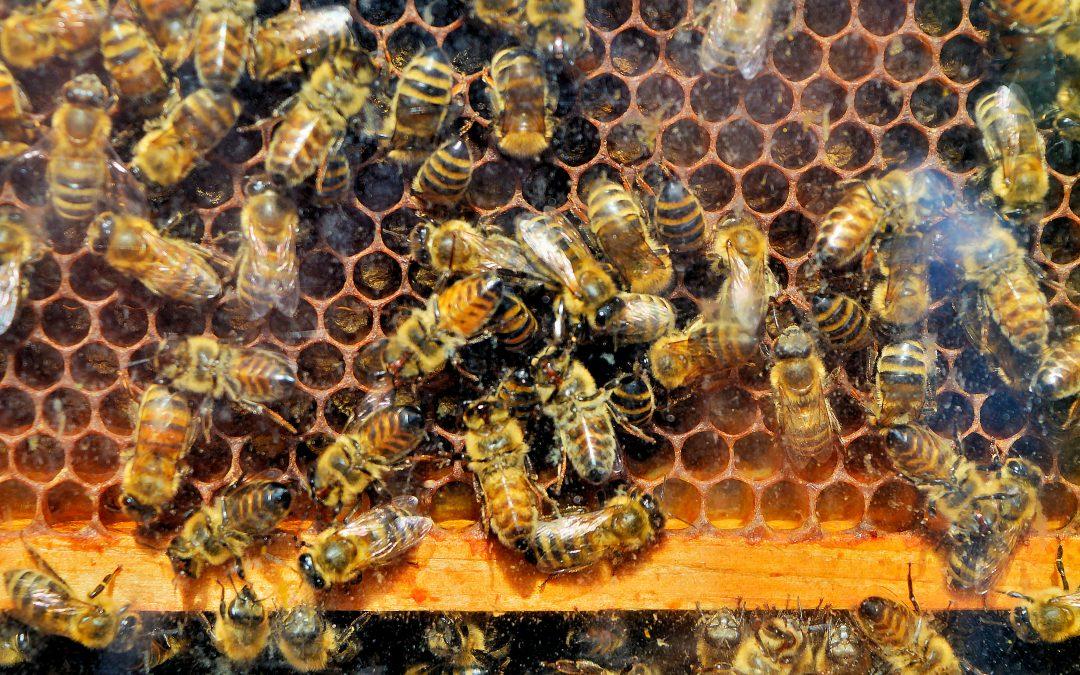 Bienenschnupperkurs für Erwachsene Ende August