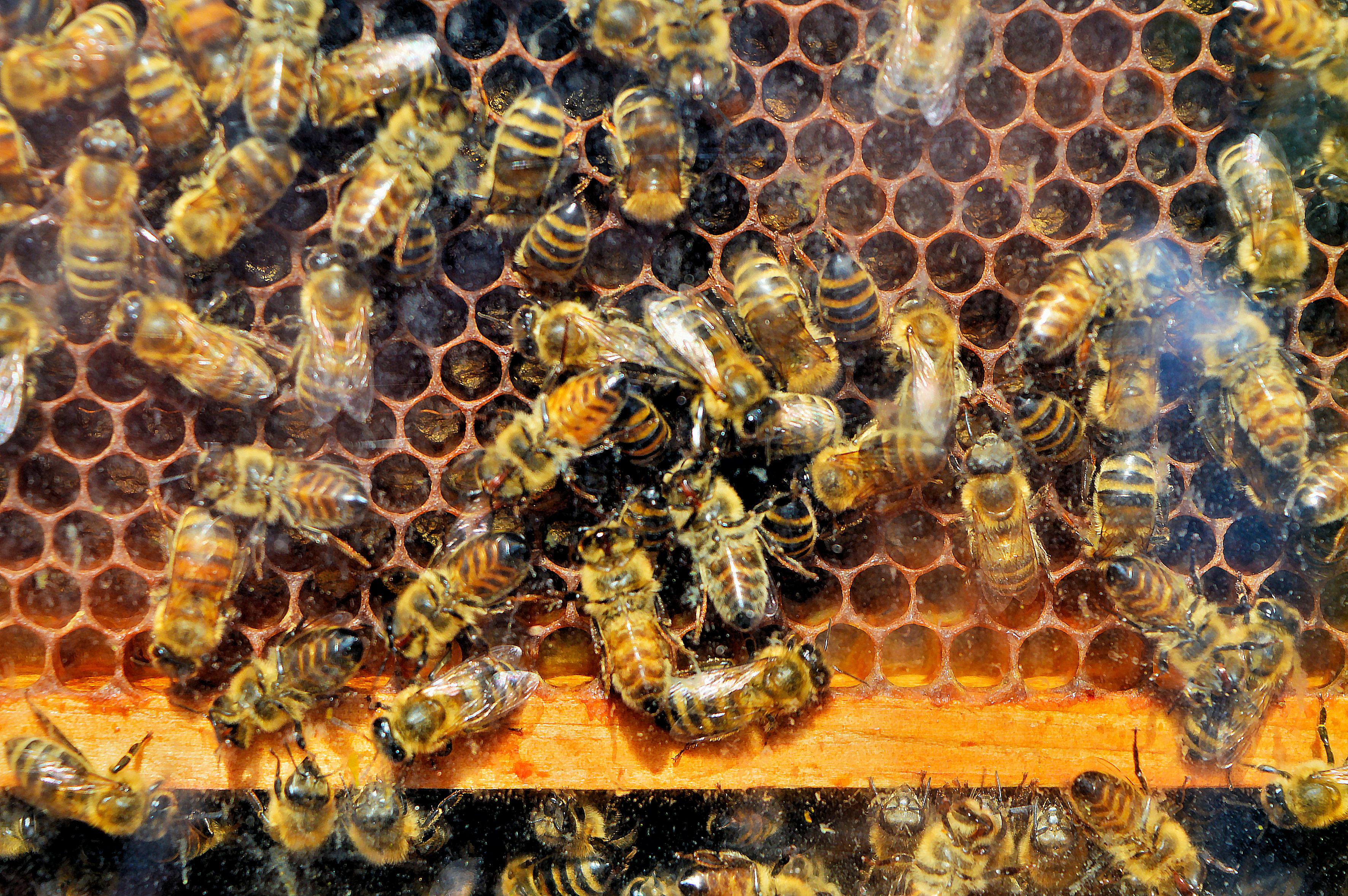 Bienen Kinder Und Jugendfarm Bremen E V