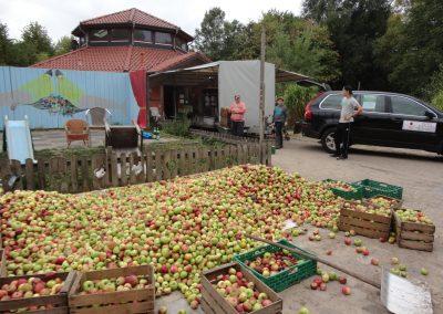 Apfelpressen
