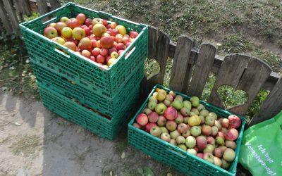 Apfelpressen für Schulklassen