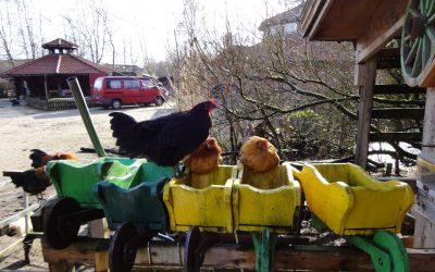 15.10.19 – Radtour zur Stadtteilfarm in Huchting – ab 8 Jahren