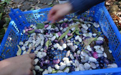09.11.19 – Regionales Saatgut erhalten – Ein Vormittag zur Rettung der Gemüsevielfalt in unseren Gärten